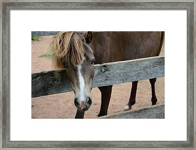 Do You Like My Hair? Framed Print