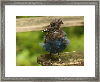 Do You Like My New Dress? Framed Print by Kym Backland