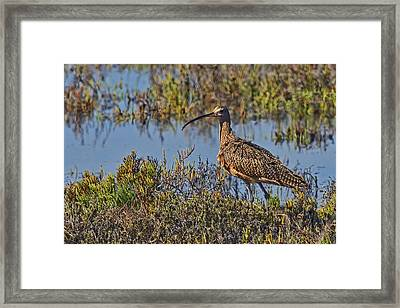 Framed Print featuring the photograph Do You Like My Stylish Beak by Gary Holmes