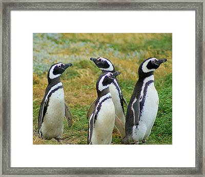 Do You Smell That - Penguins Framed Print by DerekTXFactor Creative