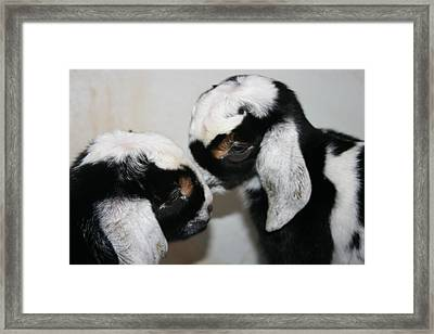 Do You Want To Know A Secret Framed Print by Kathy Peltomaa Lewis