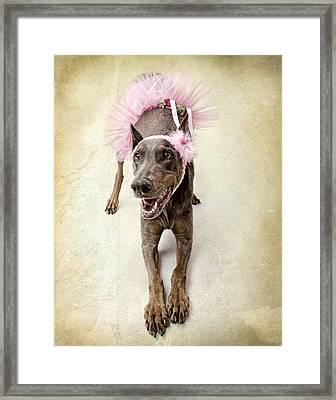 Doberman Ballerina  Framed Print