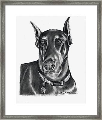 Doberman Pincher Framed Print by Barb Baker