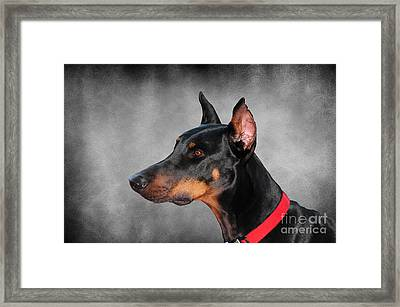 Doberman Pinscher Framed Print by Paul Ward