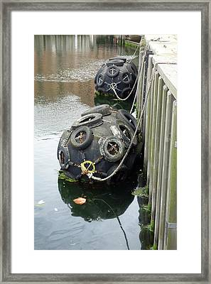 Dock Buoys Framed Print by Cordelia Molloy