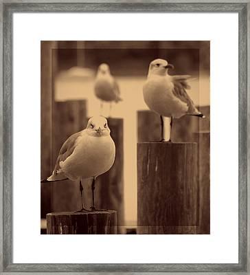 Dockside Divas Framed Print