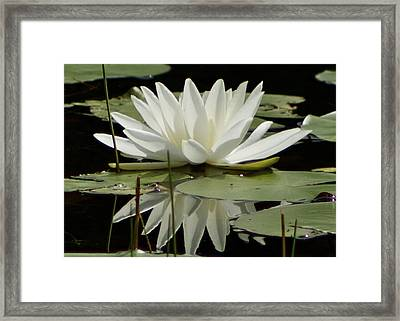 Dockside Lily Framed Print