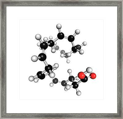Docosahexaenoic Acid Framed Print by Molekuul