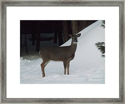 Doe A Deer Framed Print by Brenda Brown