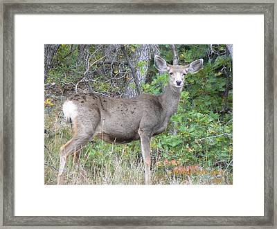 Doe A Deer Framed Print