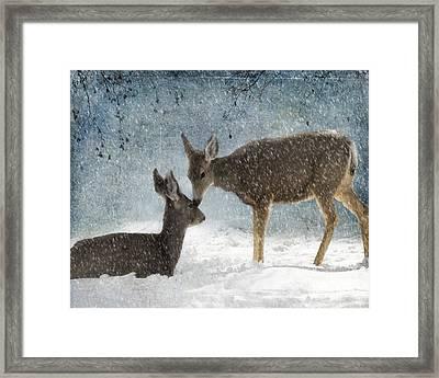 Doe A Deer Framed Print by Juli Scalzi