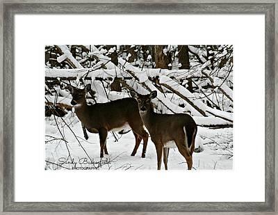 Doe A Deer Framed Print