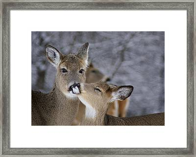 Doe And Fawn Framed Print