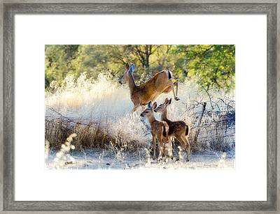 Doe And Fawns... Framed Print by Gary Rose