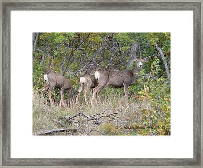 Doe And Two Fawns Framed Print