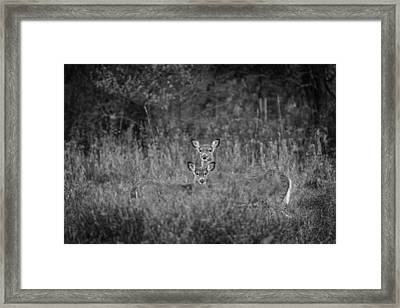 Doe And Yearling Fawn Framed Print