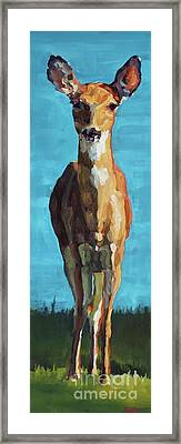 Doe At Sodus Framed Print