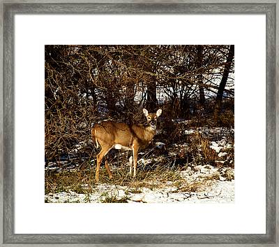Doe From The Tangle Framed Print by Thomas Young