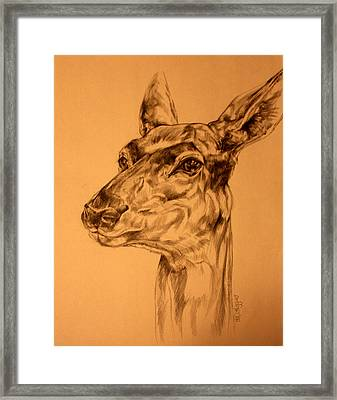 Doe Sketch Framed Print by Derrick Higgins