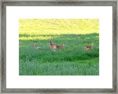 Doe With Triplets Framed Print