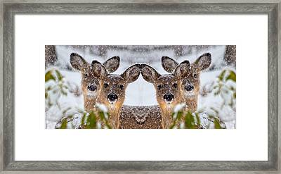 Doe You See Me Framed Print by Betsy Knapp