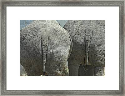 Does My Butt Look Big Framed Print by Donna Blackhall