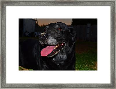 Framed Print featuring the photograph Puffed Out 1 by Naomi Burgess