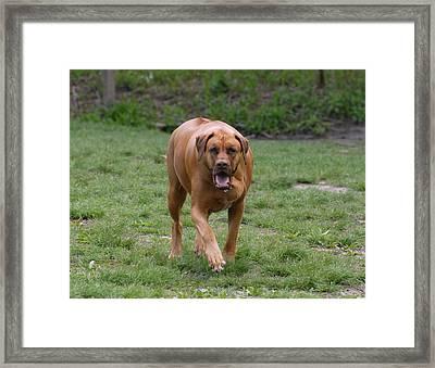 Dog 159 Framed Print by Joyce StJames