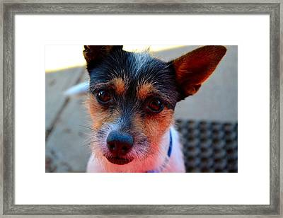 Framed Print featuring the photograph Chocolate Eyes by Naomi Burgess