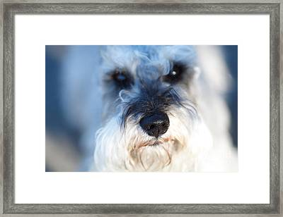Dog 2 Framed Print by Wingsdomain Art and Photography