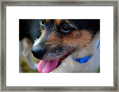 Framed Print featuring the photograph Puffed Out 2 by Naomi Burgess