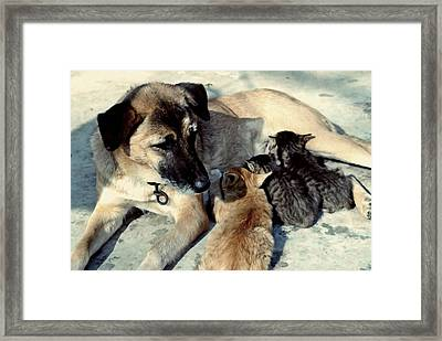 Dog Adopts Kittens Framed Print by Lanjee Chee