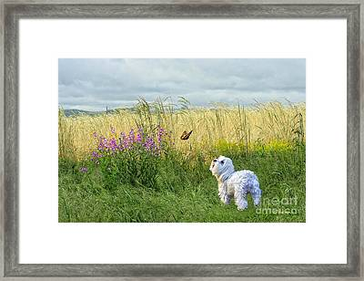Dog And Butterfly Framed Print by Andrea Auletta