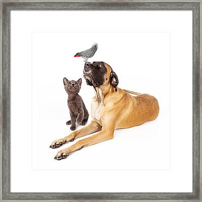 Dog And Cat Looking At A Bird Framed Print by Susan Schmitz