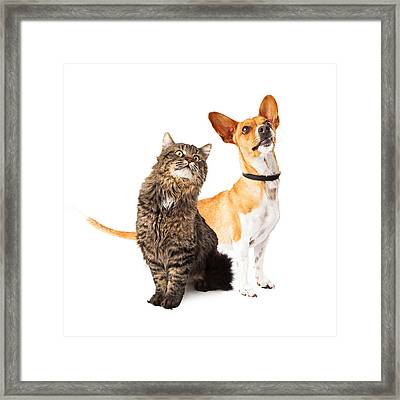 Dog And Cat Looking Up Together Framed Print by Susan Schmitz