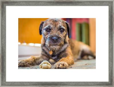 Framed Print featuring the photograph Dog And Chew. by Gary Gillette