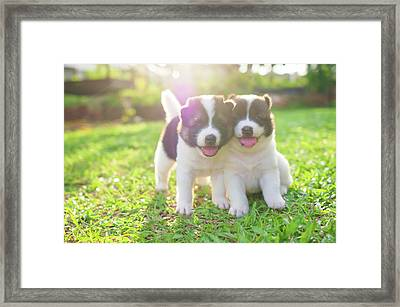 Dog And Puppies Framed Print by Primeimages