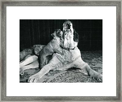 Dog And Puppy Howling Framed Print by Retro Images Archive