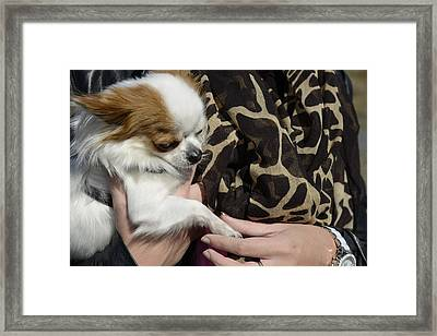 Dog And True Friendship 3 Framed Print