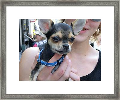 Dog And True Friendship 7 Framed Print