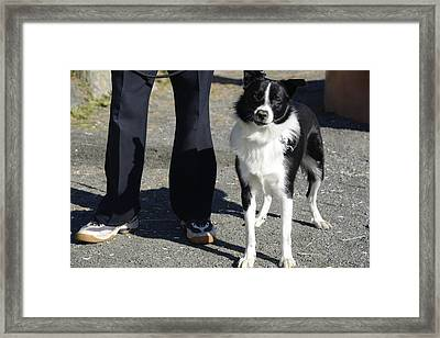 Dog And True Friendship 9 Framed Print