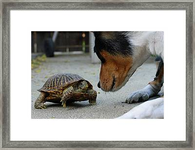Dog And Turtle Framed Print