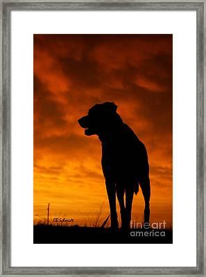 Dog At Sunset Framed Print