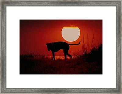 Dog At Sunset Framed Print by Jana Thompson