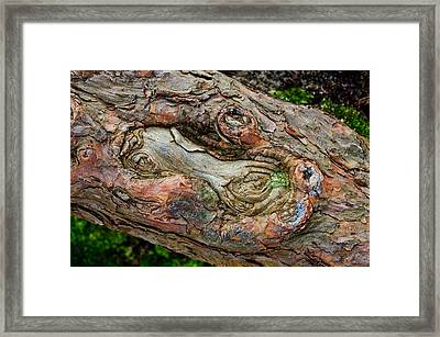 Framed Print featuring the photograph Dog Bone In The Bark by Gary Slawsky