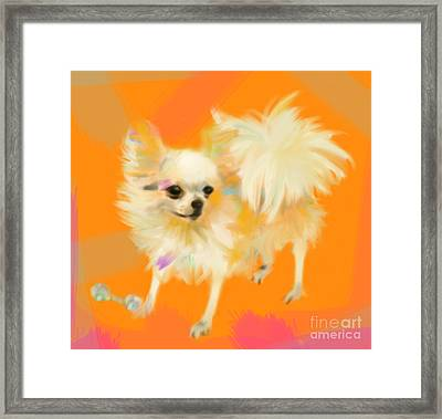 Dog Chihuahua Orange Framed Print