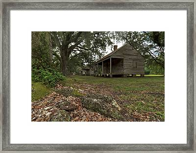 Dog Day Afternoon Framed Print by Stellina Giannitsi