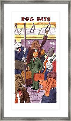 Dog Days Framed Print by Danny Shanahan