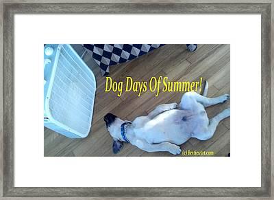 Dog Days Of Summer Framed Print