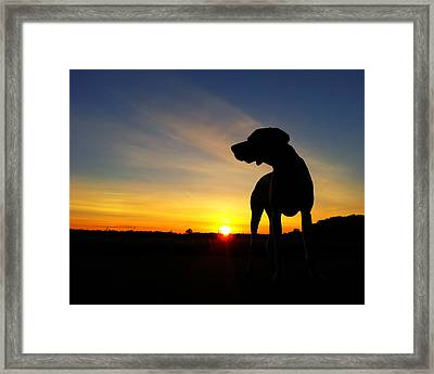 Dog Days Of Summer Framed Print by Brook Burling